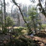 he Borecka Forest (A. Bitner-Wróblewska, T. Nowakiewicz, A. Rzeszotarska-Nowakiewicz 2011, 407).